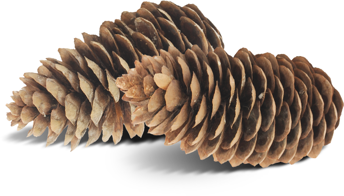 pinecone badge