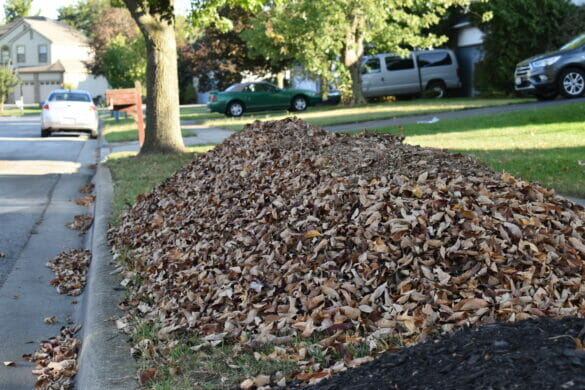 pile of leaves on a curb