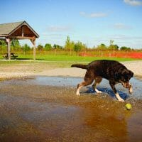 dog playing with ball at dog park splash pad