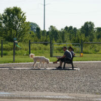 A couple sitting on a bench with their dog walking around