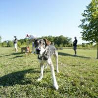 A dog approaching camera