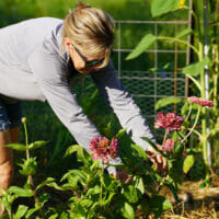 A woman working in a community garden
