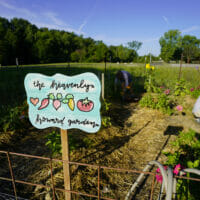 A community vegetable garden