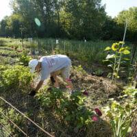 A man working in a community garden