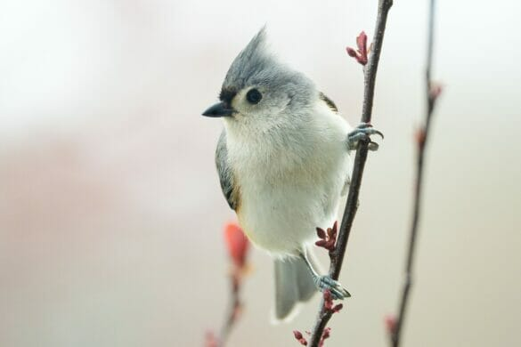A gray and white bird