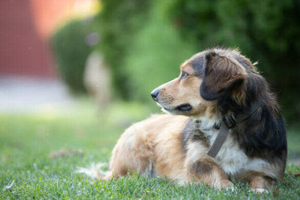Portrait photo of an adorable mongrel dog